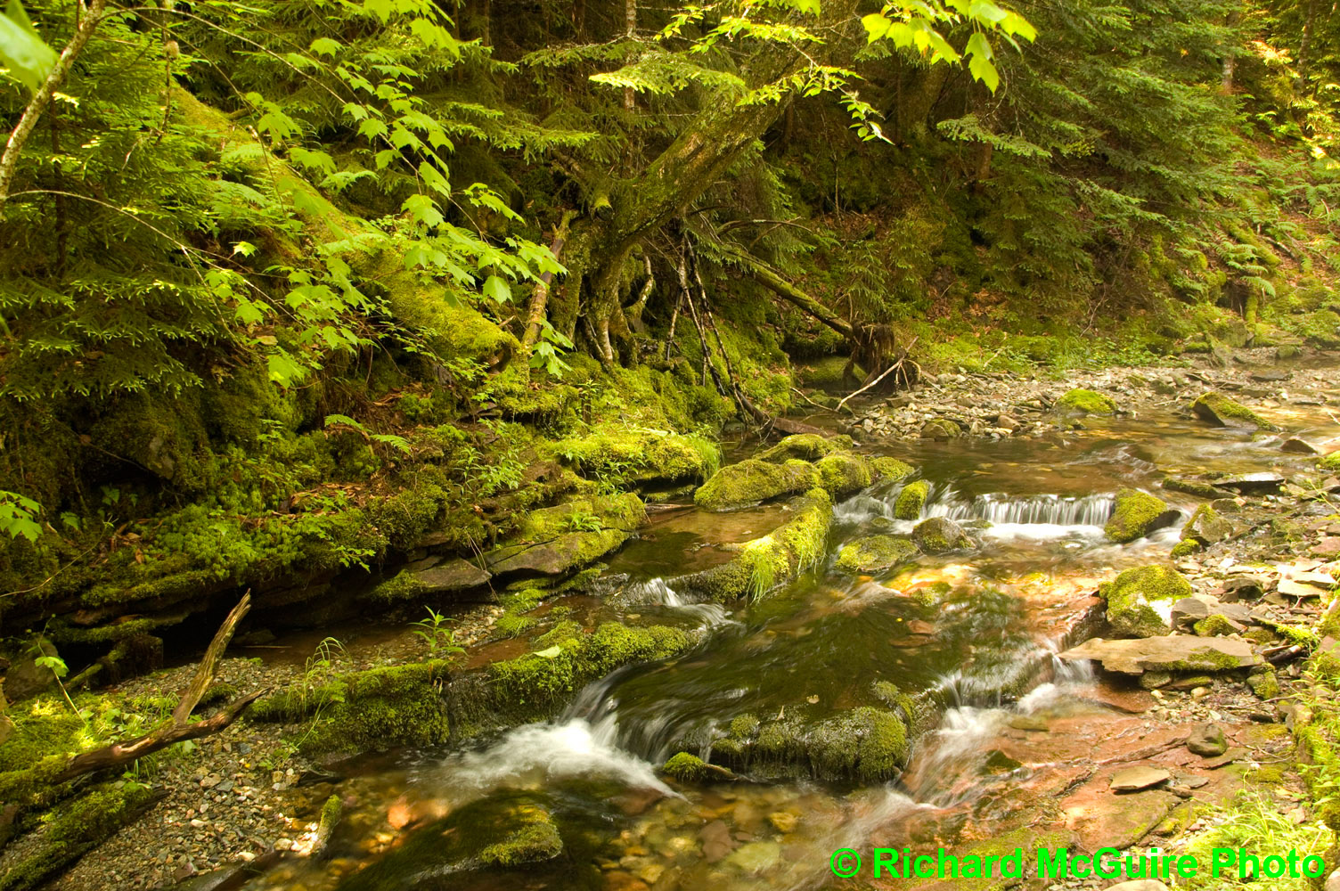 Mossy stream, Fundy National Park, New Brunswick