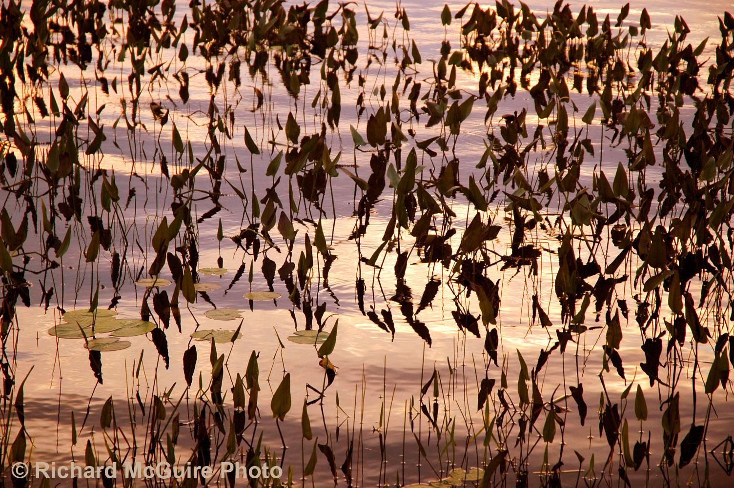 Reflections, Madawaska River, western Ontario