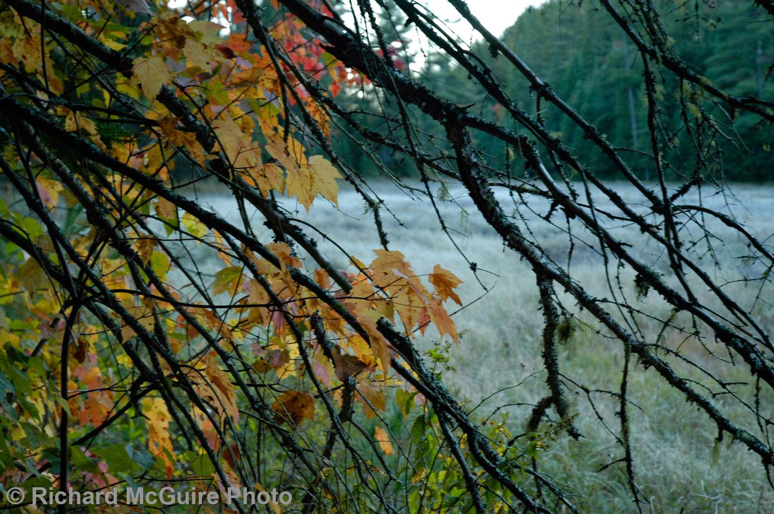 Forest, Algonquin Park