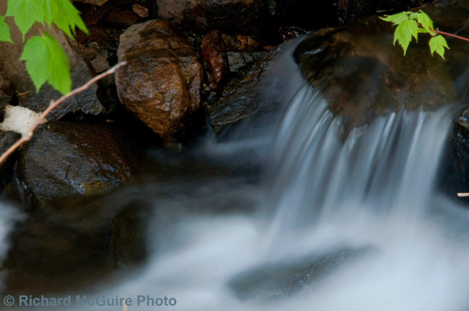 Stream in the woods, western Quebec