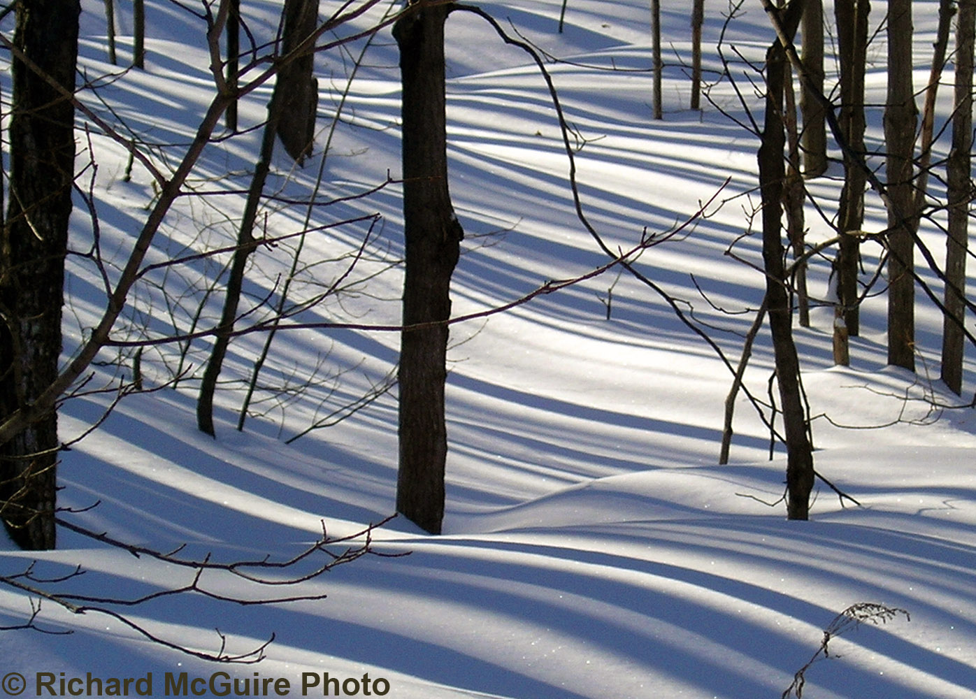 Tree Shadows on Snow, Chelsea, Québec