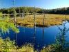 Small lake, Algonquin Park
