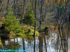 Beaver pond, Gatineau Hills, western Quebec