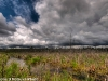 Wetlands and gathering storm clouds (2)