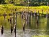 Beaver pond, Frontenac Provincial Park