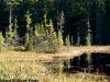 Muskeg, Algonquin Park, Ontario
