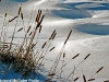 Cattails in snow, Gatineau Park, QC