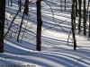 Tree Shadows on Snow, Chelsea, Québec