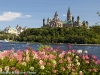 Flowers with Parliament Hill in the background