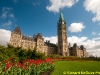 Tulip time in Ottawa