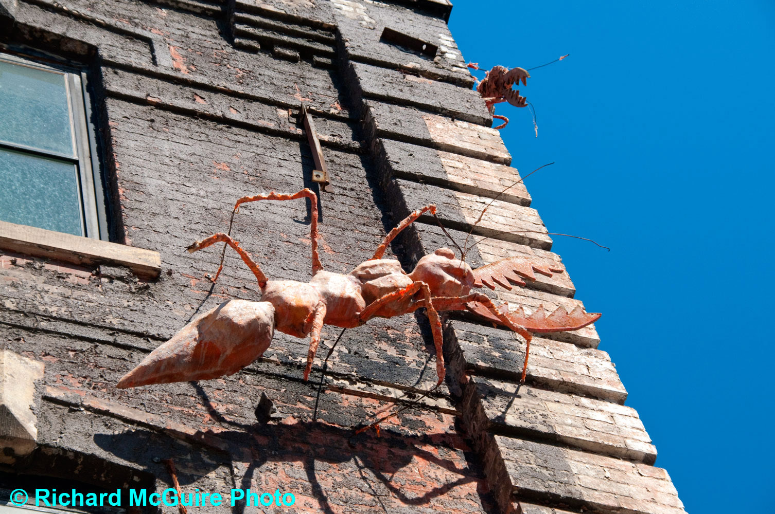 Giant insect, Queen Street, Toronto