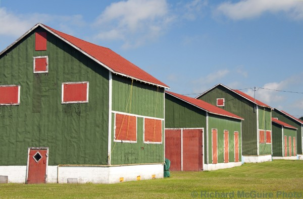Tobacco barns, near Delhi, Ontario