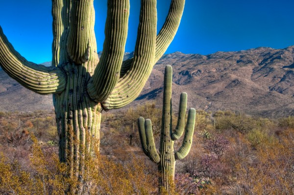 Saguaro National Park, near Tucson, Arizona