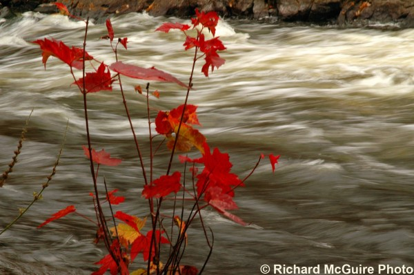 Raging river, autumn leaves