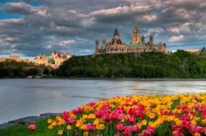 Tulips and clearing storm clouds, Ottawa