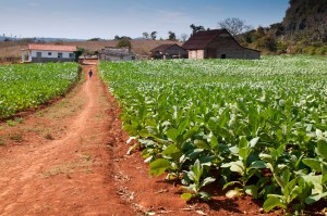 Tobacco farm, near Viñales